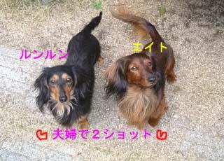 エイトとルンルン2のコピー.jpg