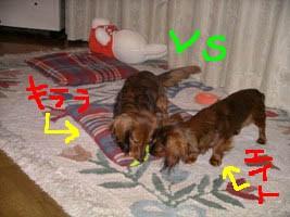エイトとキララおもちゃB1.jpg