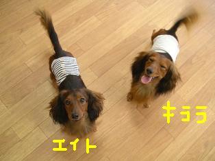 エイトとキララ2ショットbe.JPG