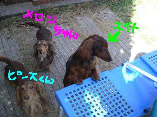 エイトとピースとメロンちゃんe.jpg