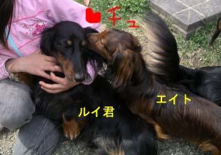 エイトルイ君にちゅbのコピー.jpg