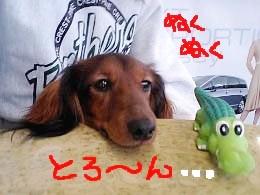 エイト本田とろーんb.jpg