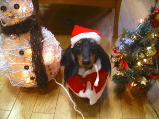 エディ君クリスマスbn.jpg