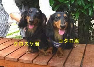 クロちゃんとコタロbのコピー.jpg