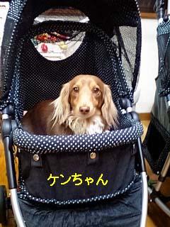 ケンちゃんブラックBのコピー.jpg