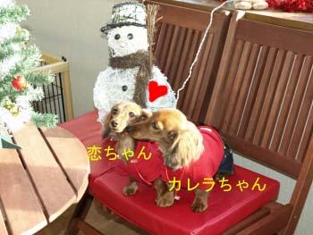 コイカレちゅbのコピー.jpg