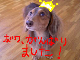 ピース可愛い1b冠.jpg