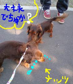 狂犬病接種b.jpg