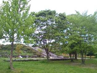 公園b.jpg