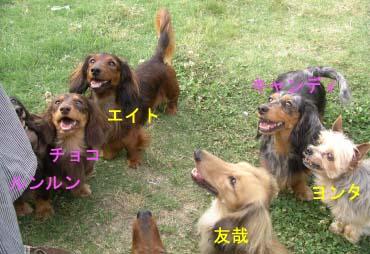 軍団笑顔Bーおのコピー.jpg