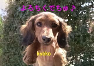 今日子ちゃん1bのコピー.jpg