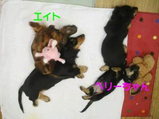 子犬あついらしい…Bのコピー.jpg