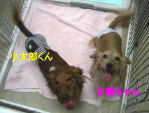 小葉コタのコピー.jpg