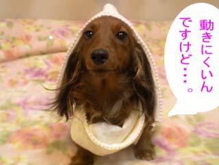 聖子かぶりbB.jpgのコピー.jpg