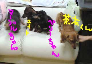 茶いくんベマちゃんと e.jpg