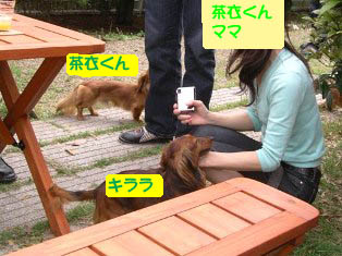 茶衣くん、キララb.jpg