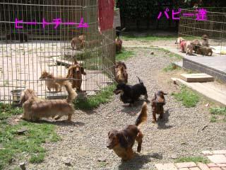 庭の様子bのコピー.jpg