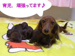 恋ちゃんとベビー達1Bのコピー.jpg