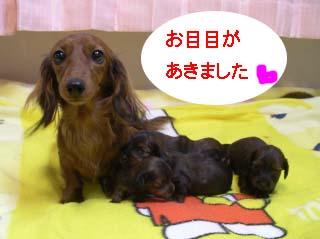 恋ちゃんとベビー達2Bのコピー.jpg