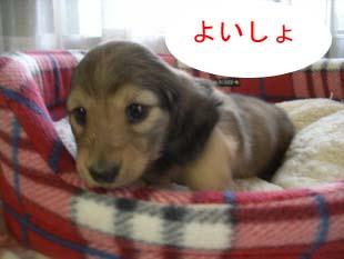 ちょーじょ4bのコピー.jpg