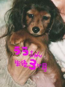ララぱぴ2のコピー.jpg