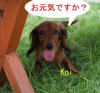 koibの2コピー.jpg