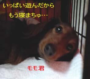 momo顔bのコピー.jpg