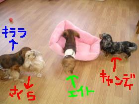 ranベット移動エイトe.jpg