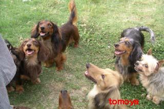 tomoNのコピー.jpg